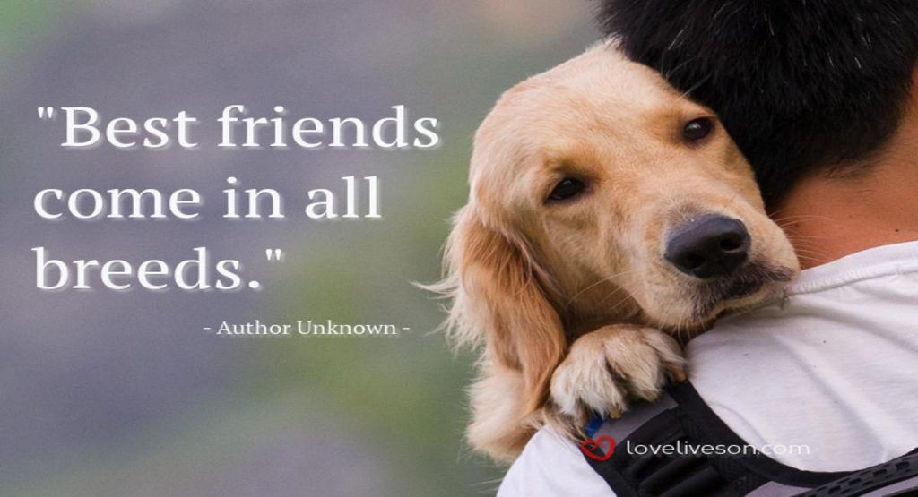 Loss Of A Pet Quote Prepossessing 100 Best Sympathy Quotes  Love Lives On