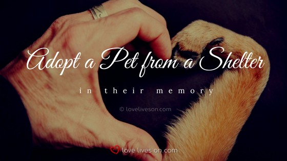 Celebration of Life Ideas: Adopt a Pet
