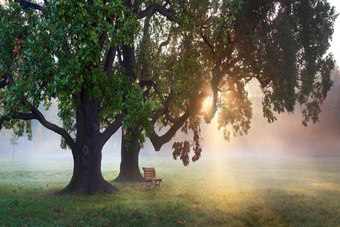 Cover Photo: Memorial Trees & Benches in Canada