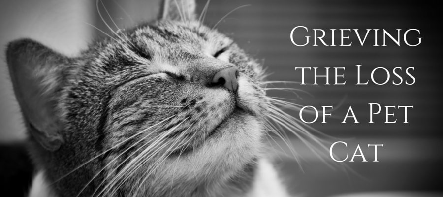Heading: Grieving the Loss of a Pet Cat