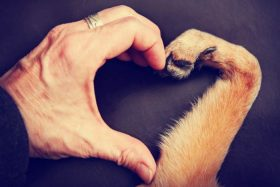 50 Beautiful Loss Of Pet Quotes Love Lives On