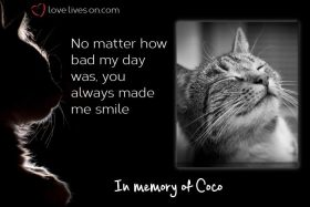 50+ Beautiful Loss of Pet Quotes | Love Lives On