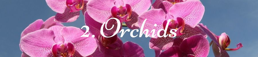 Heading: Orchid Meaning