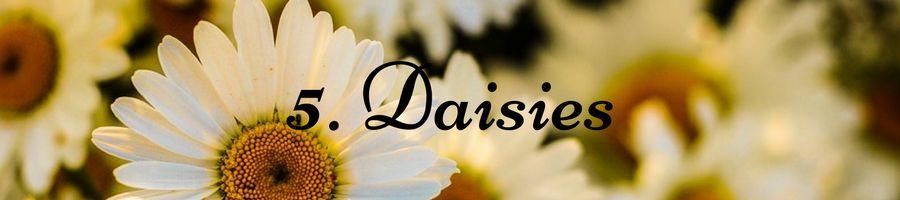 Heading: Daisy Meaning