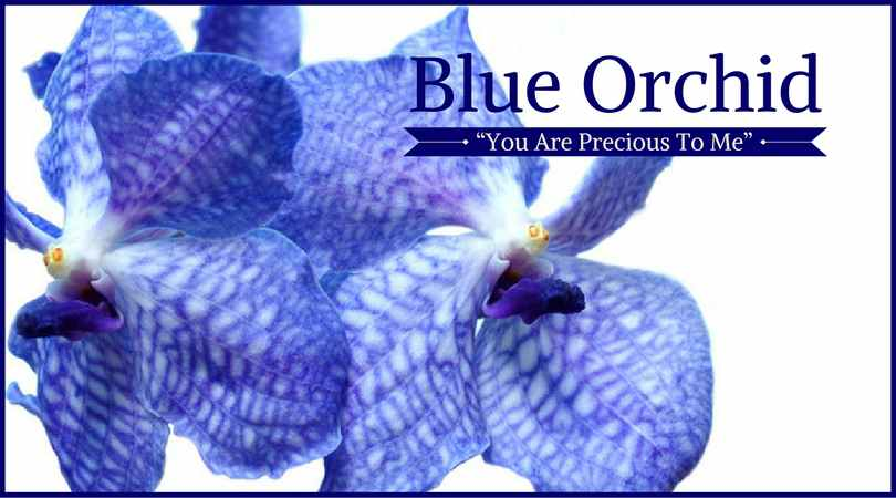 Orchid Meaning: Blue Orchid