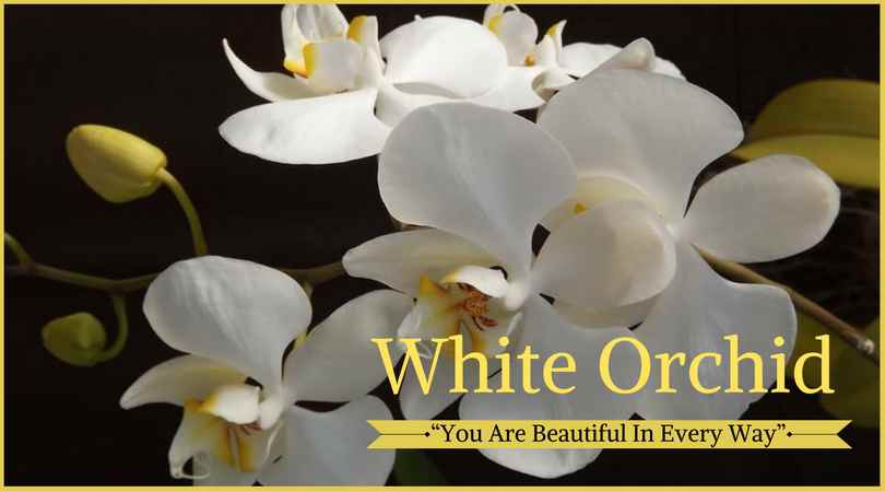 10 best funeral flowers ultimate guide love lives on orchid meaning white orchid mightylinksfo