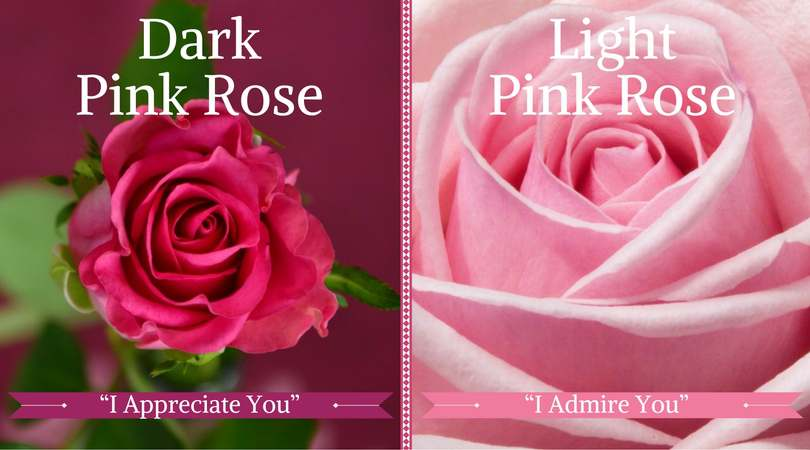 10 best funeral flowers ultimate guide love lives on rose meaning dark light pink mightylinksfo