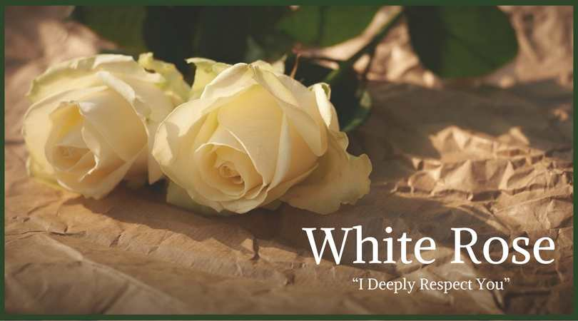a white rose poem symbolism