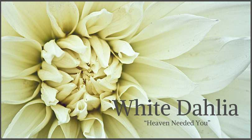 10 best funeral flowers ultimate guide love lives on dahlia meaning white dahlia mightylinksfo Gallery