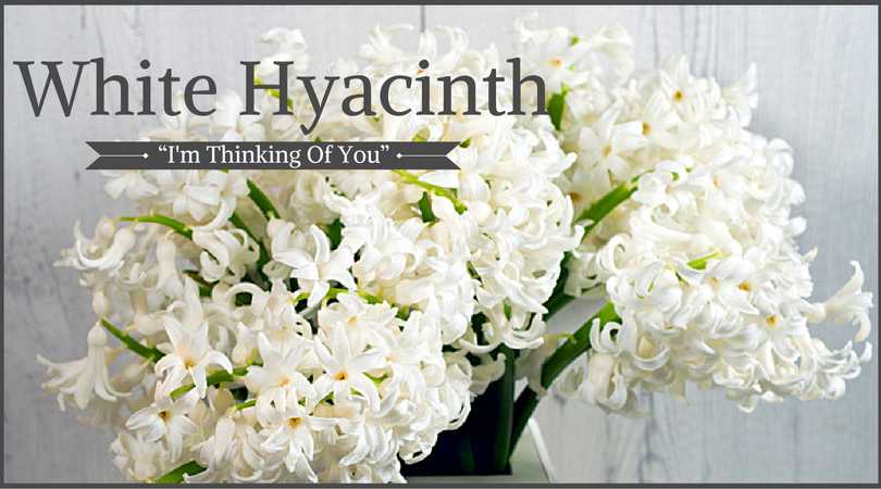 10 best funeral flowers ultimate guide love lives on hyacinth meaning white hyacinth mightylinksfo Images