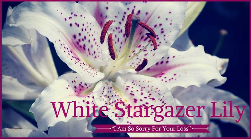 10 best funeral flowers ultimate guide love lives on lily meaning white stargazer lily mightylinksfo Images