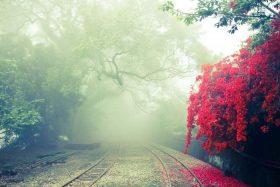 Cover Photo; Memorial Trees United Kingdom