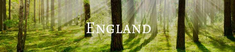 Banner Heading: Memorial Trees England