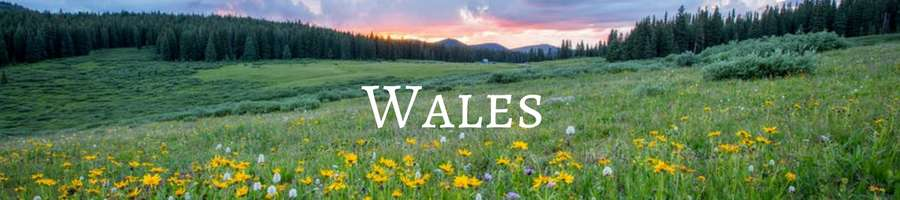 Banner Heading: Memorial Trees in Wales