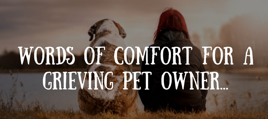 60 Beautiful Loss Of Pet Quotes Love Lives On Inspiration Dog Loss Quotes