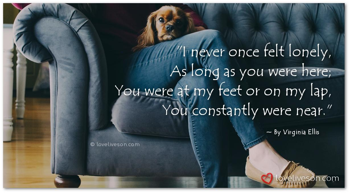 Top 10 Loss of Dog Poems | Love Lives On