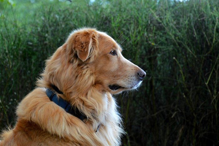 50+ Heartfelt Loss of a Dog Quotes | Love Lives On
