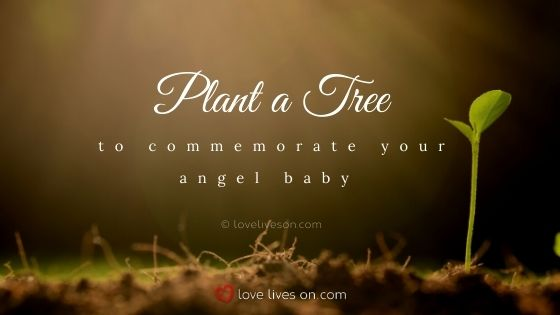 Plant a tree for your rainbow baby and angel baby